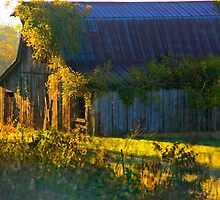 Down On The Farm by NatureGreeting Cards ©ccwri