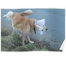 Coned Dog Peeing Poster