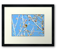Precious Yellow Finch Framed Print