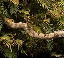 A Snaking Branch by Belinda Osgood