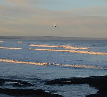 Seagull Over Waves Off West Sands by Adrian Wale