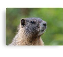 Marmot Portrait Canvas Print