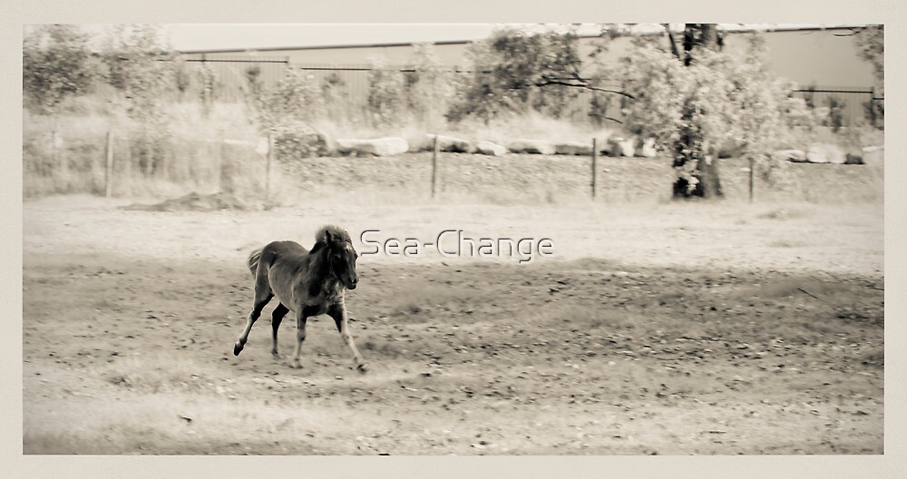 Cantering in Creamtones by Sea-Change