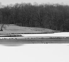 Ni River Reservoir Winter Birds by John Ayo