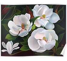 Immaculate magnolias. Poster