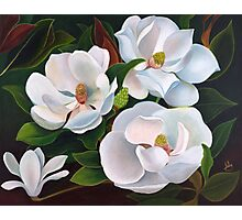 Immaculate magnolias. Photographic Print