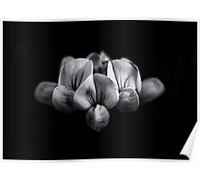Backyard Flowers In Black And White 5 Poster