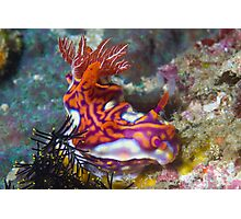 Magnificent Nudibranch Photographic Print