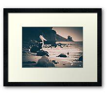 pelican pt willunga, Sth australia Framed Print