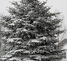 Tree in Snow by alamarmie