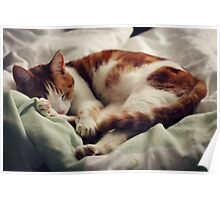Molly the cat Poster
