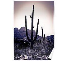 Cactus #71 Poster