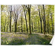Micheldever Wood in Springtime Poster