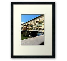 italian pigeon Framed Print