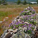 Mount Levi - Lapland - Finland by Arie Koene