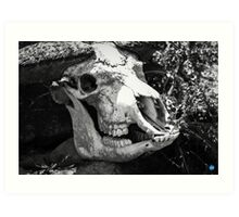 Eerie Skull Art Print
