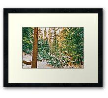 Winter Forest Golden Light Framed Print