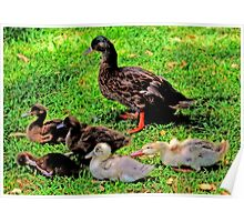 The Duck's Family Portrait Poster