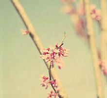 colors of spring by beverlylefevre