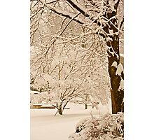 Sepia snow... Photographic Print