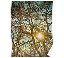 Golden Branches In The Snow Poster