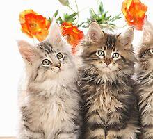 Cat-mi-Cat by CellShop