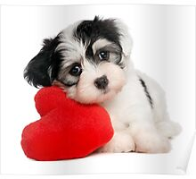 Cute dog and Heart-shaped Poster