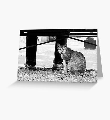 The Stray Greeting Card