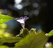 Purple flower by DebWinfield