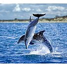 Dolphins of Port Phillip by Yanni