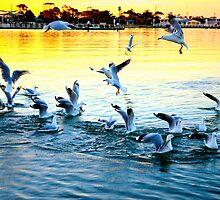 Port Gull by Sarah Barclay