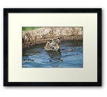 Playful Tiger  Framed Print