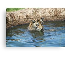 Playful Tiger  Canvas Print