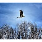 Yellow Tailed Black Cockatoo 02 by Yanni