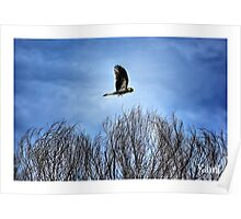 Yellow Tailed Black Cockatoo 02 Poster
