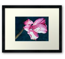 New Year Flower Framed Print