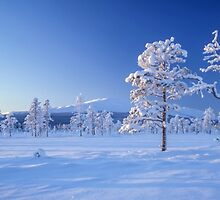 Snow covered trees by Ingvar Bjork Photography