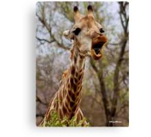 HOW MUCH LONGER MUST I HOLD MY  TUNG !!! -GIRAFFE – Giraffa Camelopardalis (KAMEELPERD) Canvas Print
