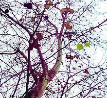 Autumn Tree by DFLC Prints