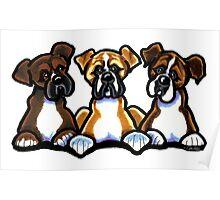 Three Boxers Poster
