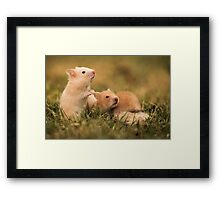 Golden hamster with her young litter on the lawn Framed Print
