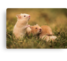 Golden hamster with her young litter on the lawn Canvas Print