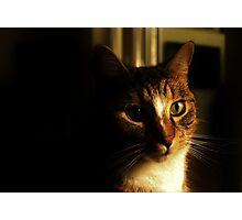 What`s Up Millie Cat Photographic Print