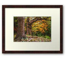 A Trip To Autumn Framed Print