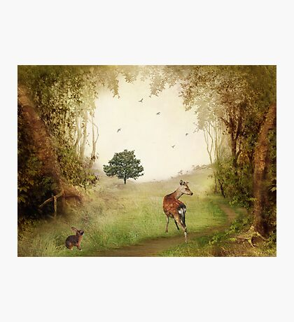 Woodland Friends Photographic Print