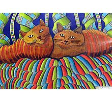 402 - STRIPY CATS  - DAVE EDWARDS - COLOURED PENCILS - 2014 Photographic Print
