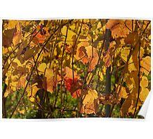 Autumn vines Poster