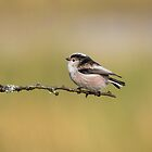 Long-tailed tit by M.S. Photography & Art