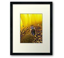 The Bee Buffet  Framed Print