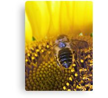 The Bee Buffet  Canvas Print